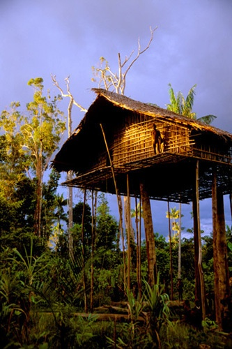 Kombai tree house, West Papua New Guinea - looks a bit precarious!