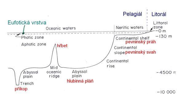 Výsledek obrázku pro ekologie moře