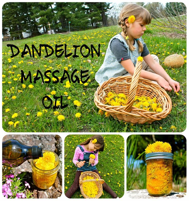 Make Dandelion Massage Oil -- a GREAT use of dandelions, and a fun activity to do with the kids!