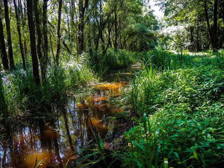 erdő mélyén ( Dél-Hanság )