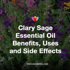 The Botanical name for Clary Sage is Salvia sciarea. The leaves and flower buds of the Clary Sage are steam distilled. The Clay Sage Essential Oil is Light Golden Yellow in color. The aroma is bright, earthy, herbaceous, with slight sweet fruitiness and is medium to strong. The Clary Sage plant grows up to two …