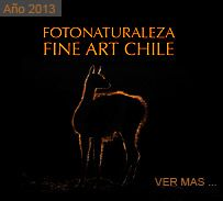 FotoNaturaleza Fine Art Chile