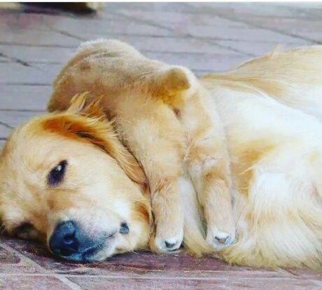 dog beautiful animals 이미지