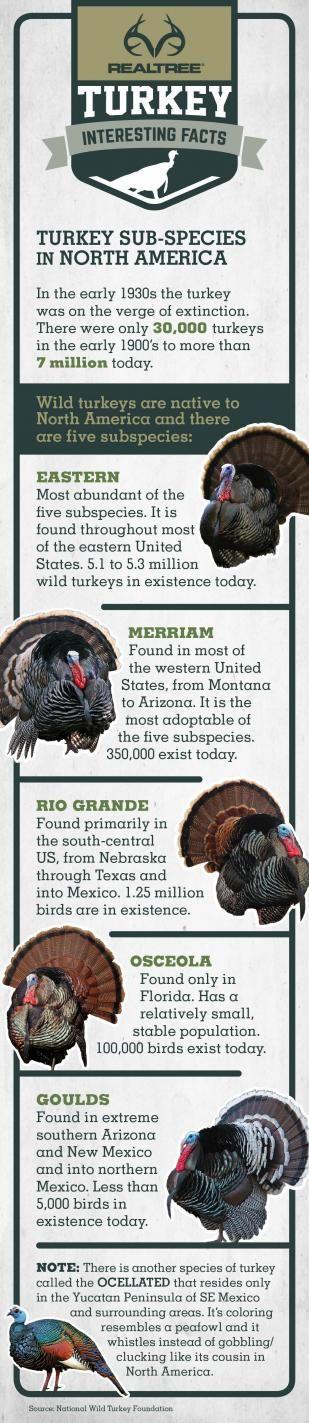 Turkey Sub-species in North America   #Realtreeinforgrphics