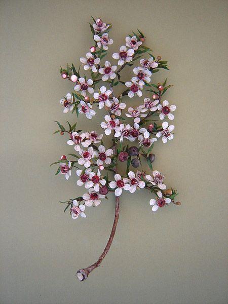 leptospermum scoparium, manuka by jude miller