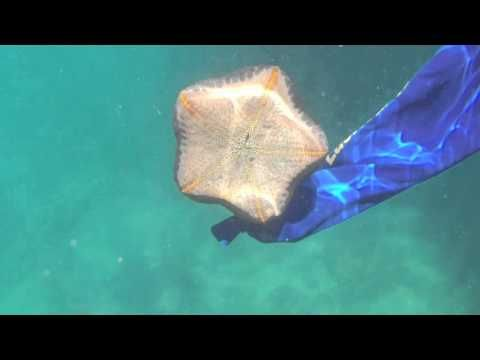 Samui Boat Charter Video - YouTube