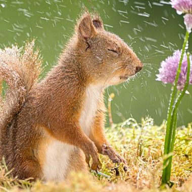 awww...who turned on the sprinkler?  (Feelin' Squirrely group board)