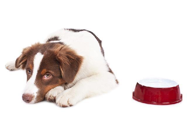Desconfia que o seu cachorro está sofrendo com dores? Confira aqui os sinais para que possa cuidar do seu amigo o quanto antes! #cachorro #animais #dogs