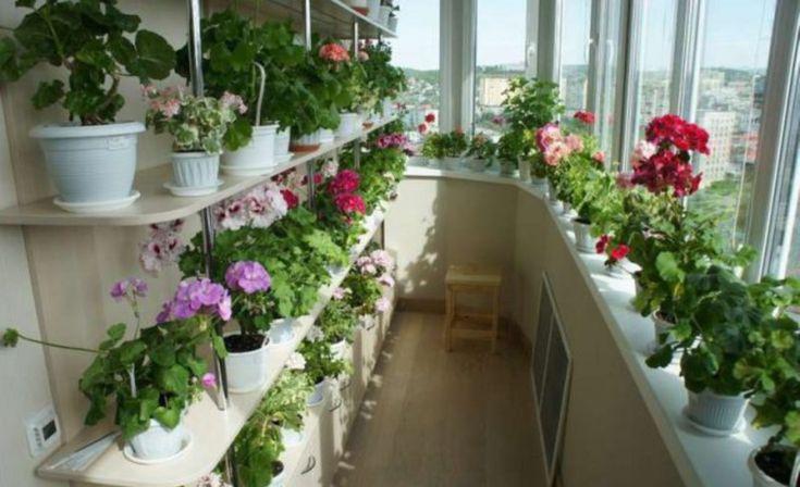Valódi virágoskertté alakíthatod az otthonod! A titok a trágyázásba rejlik, 9 nélkülözhetetlen tipp!
