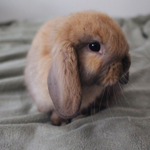 Image via We Heart It #adorable #alternative #amazing #animal #animals #baby #beautiful #beauty #boy #bunny #chic #class #classic #classy #cold #colors #couple #cutie #eyes #fall #fluffy #girl #girly #lazyday #pets #Queen #rabbit #sad #tiny #peta