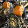 PHOTOS: Ray Villafane Unleashes an Insane Army of Ghastly Zombie Pumpkins at the New York Botanical Garden Ray Villafane Pumpkin Zombies – Inhabitat New York City