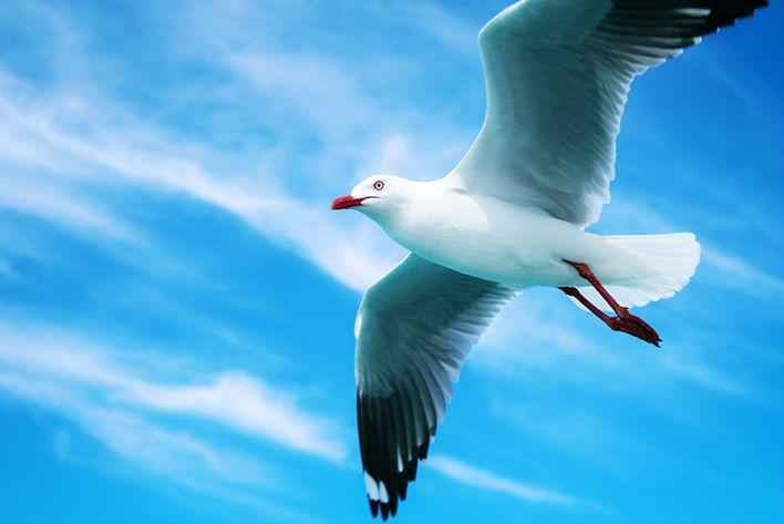 Seagull Photo by Khatti Von Leigh
