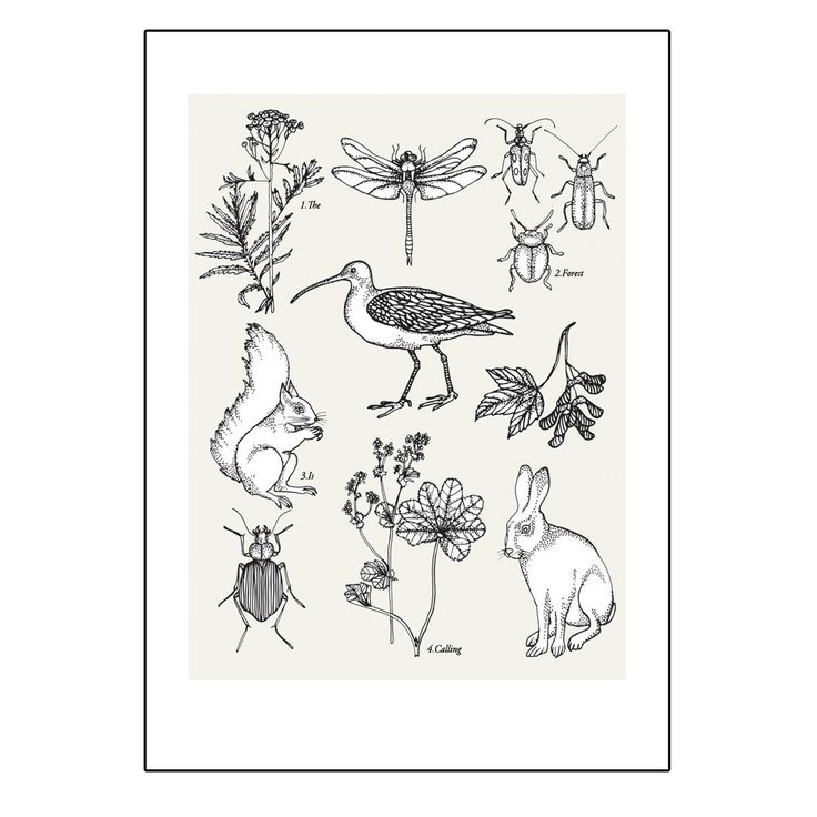 The forest is calling - Printed illustration via KNIV. Click on the image to see more!