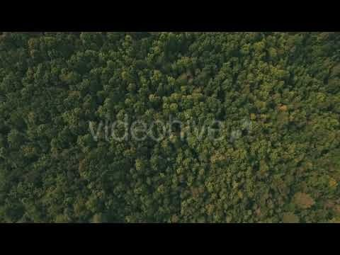 Summer Forest (Stock Footage)