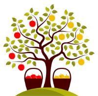 Multi Grafted Fruit Trees - Stark Bro's Custom Graft® Fruit Trees