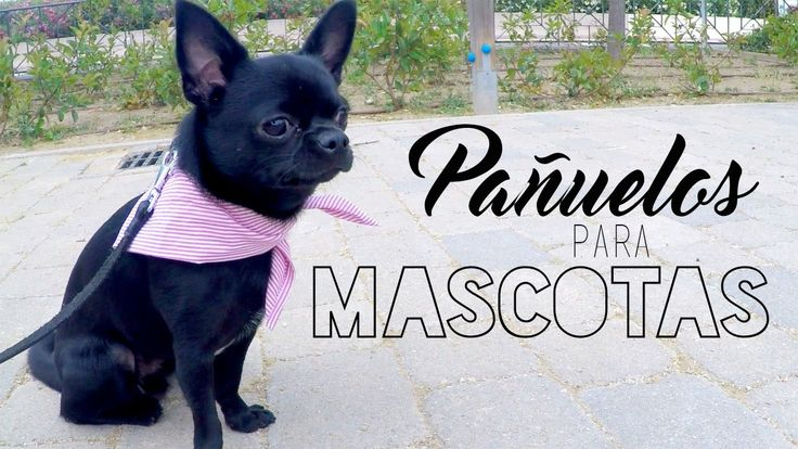 Pañuelo para mascotas sin coser ♡ DIY ❀ #Manualidades || Likesely - http://cryptblizz.com/como-se-hace/panuelo-para-mascotas-sin-coser-%e2%99%a1-diy-%e2%9d%80-manualidades-likesely/
