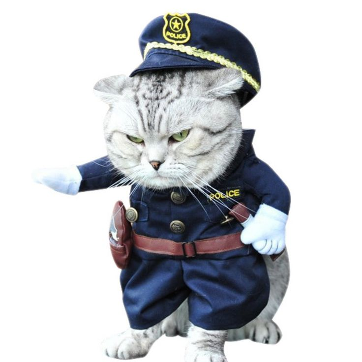 Find More Dog Coats & Jackets Information about Funny Pet cat Dog Police Costume Cosplay with Police Hat Small Dog Puppy Cat Party Uniform Suit Jacket Clothes New Arrival,High Quality pet cosplay,China cat dog costumes Suppliers, Cheap pet dog costumes from Maoyuan Store on Aliexpress.com