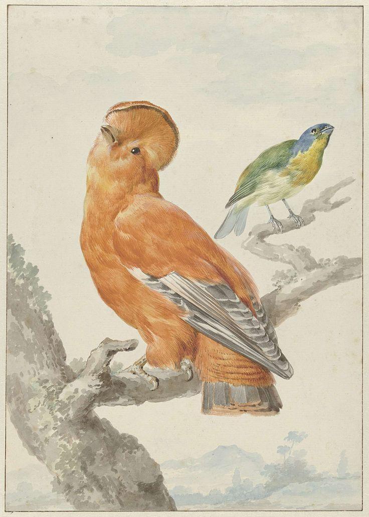 Aert Schouman | Twee exotische vogels: een rotshaan (Rupicola rupicola) en een kleurvink (Passerina lechlancherii), Aert Schouman, 1762 |