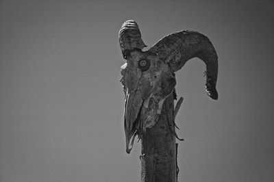 bwstock.photography - photo   free download black and white photos  //  #ram #skull