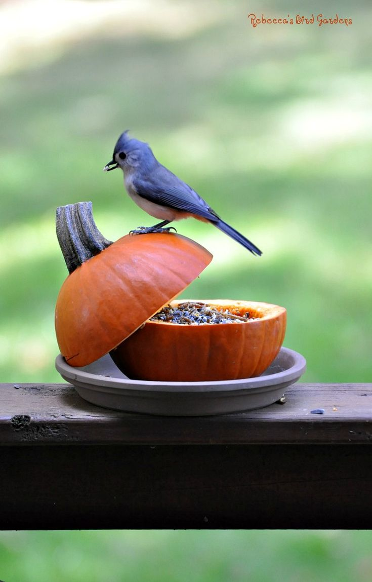 Rebecca's Bird Gardens, DIY pumpkin Bird Feeder