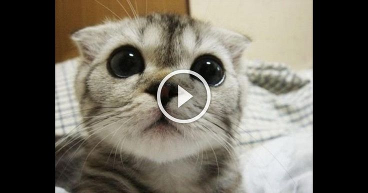 Best Funny Animals Compilations! #1 - SweetMedia