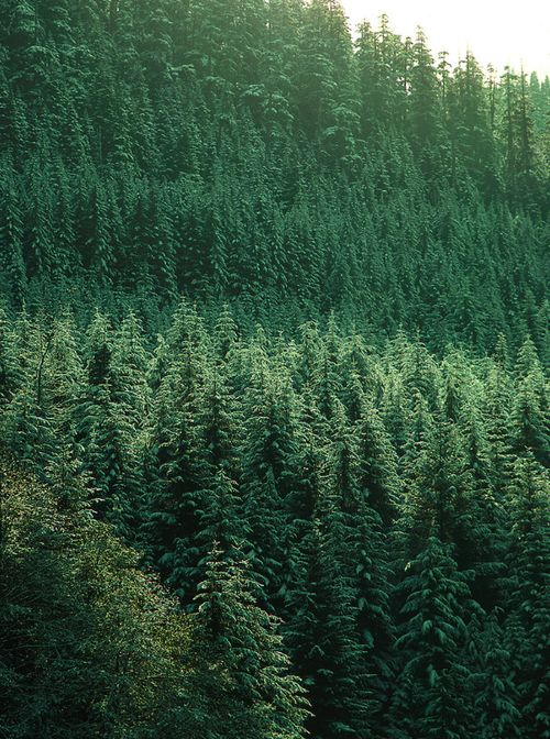 : Forests, Dreams Home, Washington State, Evergreen States, Desert, Favorite Places, Pacific Northwest, Pine, Branding Ideas