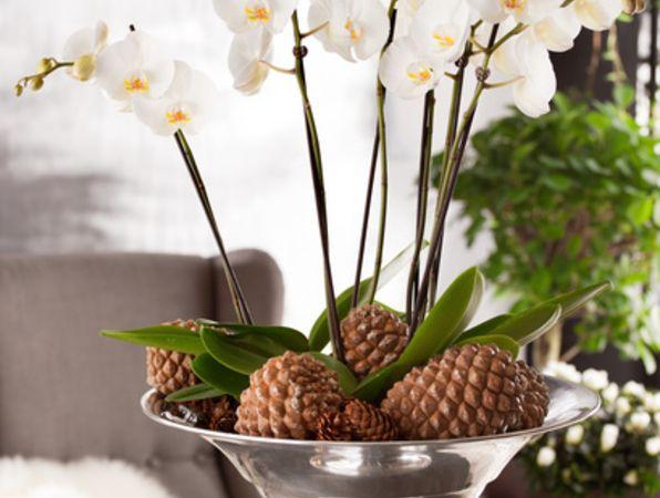 Goda råd för din orkidé!