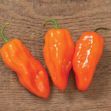 Helios Pepper Seeds (Capsicum chinense) + FREE Bonus 6 Variety Seed Pack - a $30 Value!