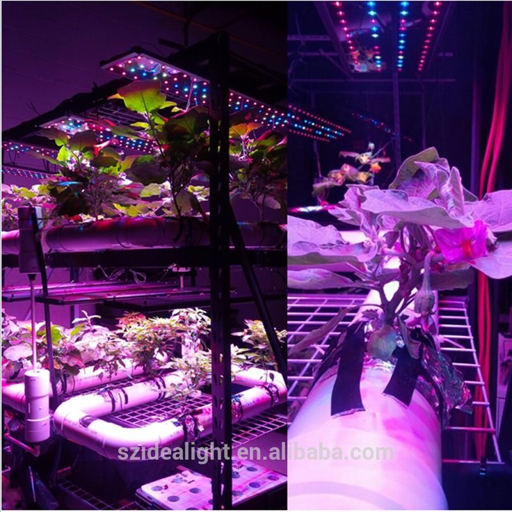 Check out this product on Alibaba.com Applow price hydroponic l& 225 canada & 24 best Hydroponics images on Pinterest   Hydroponics Led grow ... azcodes.com