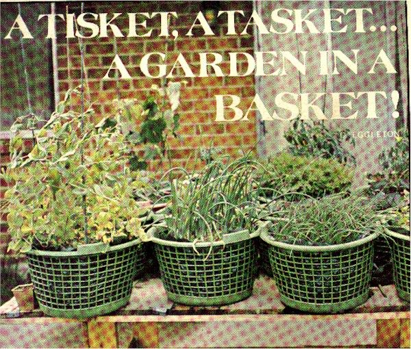 Fall Vegetable Gardening 101: 1000+ Images About Garden Ideas On Pinterest