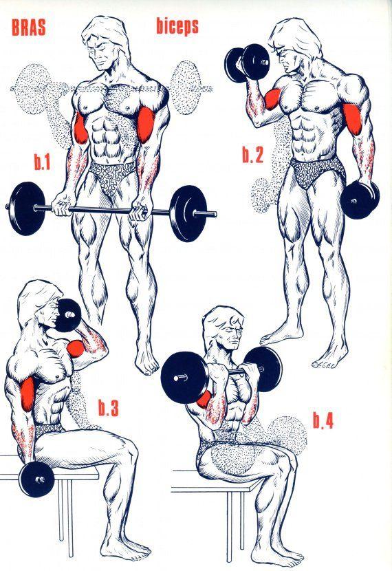 Biceps                                                       …                                                                                                                                                                                 Plus
