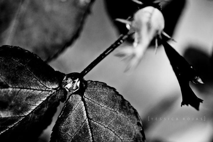 http://www.flickr.com/photos/yessicarojas/