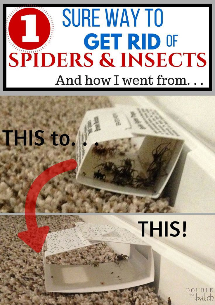 SO GROSS!! So glad to be rid of these creepy crawlers once and for all!