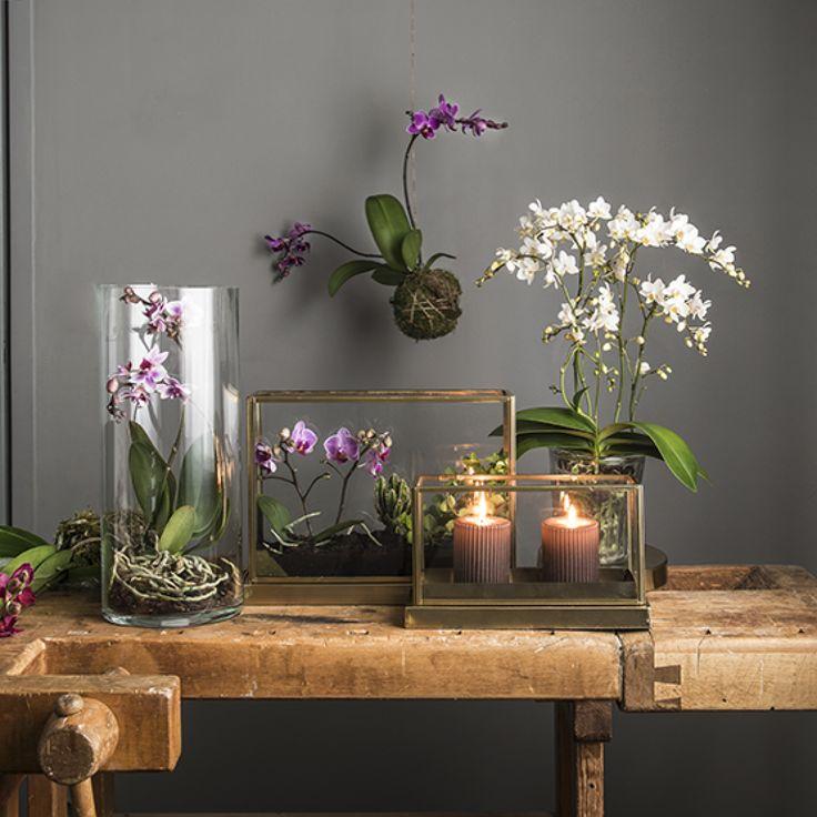 Orkideat – luonnon taideteokset. Katso vinkkimme uusiin käyttötapoihin!