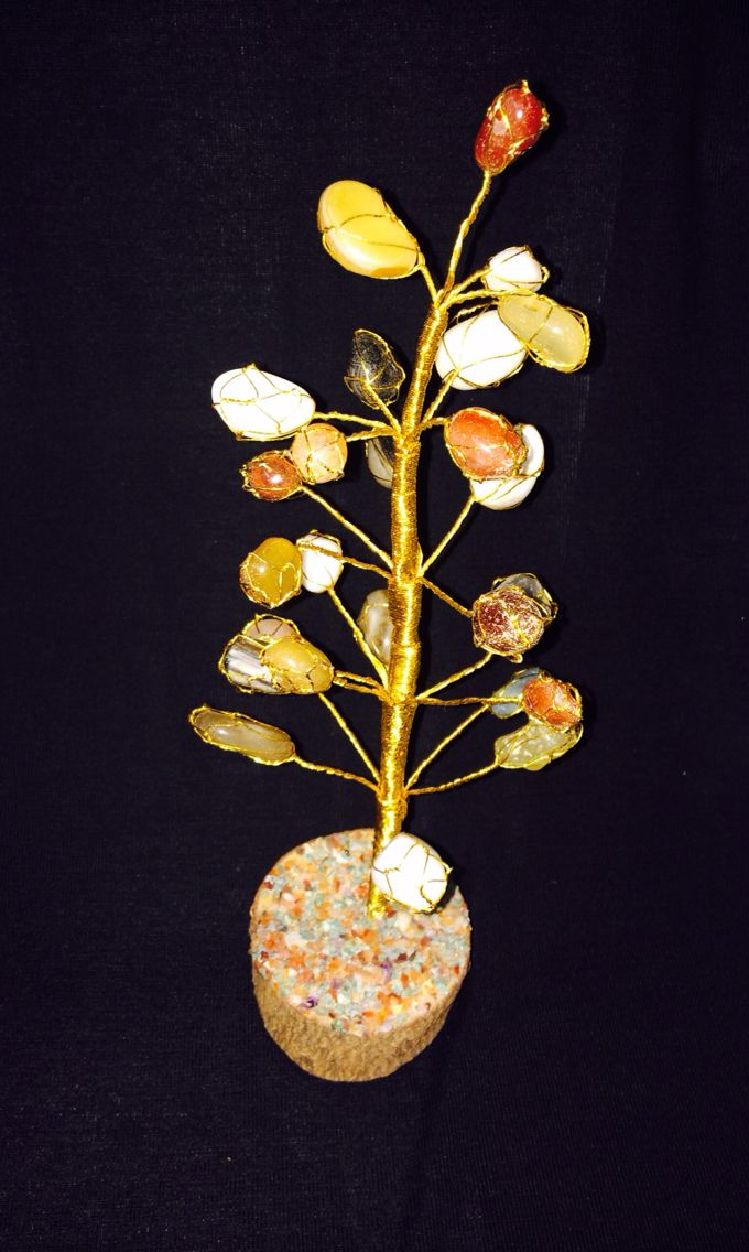 Agate stone plant for stone lovers