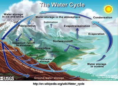 Water Carbon And Nitrogen Cycle Worksheet Color Sheet Key - Worksheets