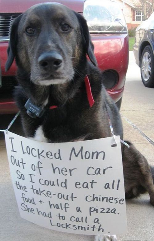 The 27 Naughtiest Dogs In The World (Hilarious Dog Shaming Gallery