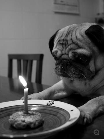 happy birthday 2 u u smell like dog 2