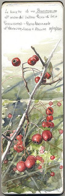Hawthorn Berry by Marco Preziosi #moleskine #moleskin #moleskineart