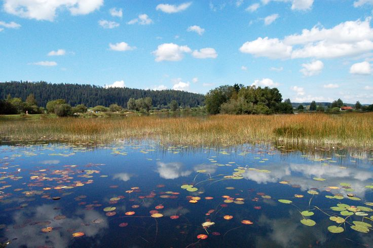 Comme un tableau de Monet... La Réserve naturelle du lac de Remoray