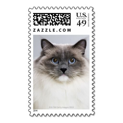 @@@Karri Best price          	Portrait of Ragdoll cat Stamps           	Portrait of Ragdoll cat Stamps online after you search a lot for where to buyThis Deals          	Portrait of Ragdoll cat Stamps Review on the This website by click the button below...Cleck Hot Deals >>> http://www.zazzle.com/portrait_of_ragdoll_cat_stamps-172138432125314799?rf=238627982471231924&zbar=1&tc=terrest
