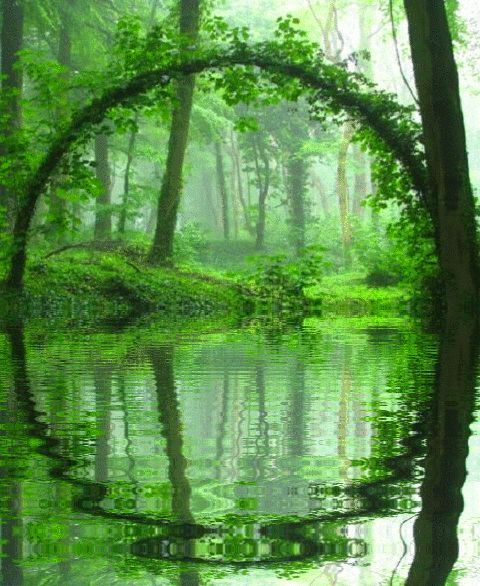 Green - Secondary colour: It is the colour that represents universal peace and also the earth and the environment. As shown in this aesthetically pleasing photograph of a peaceful, tranquil forest.