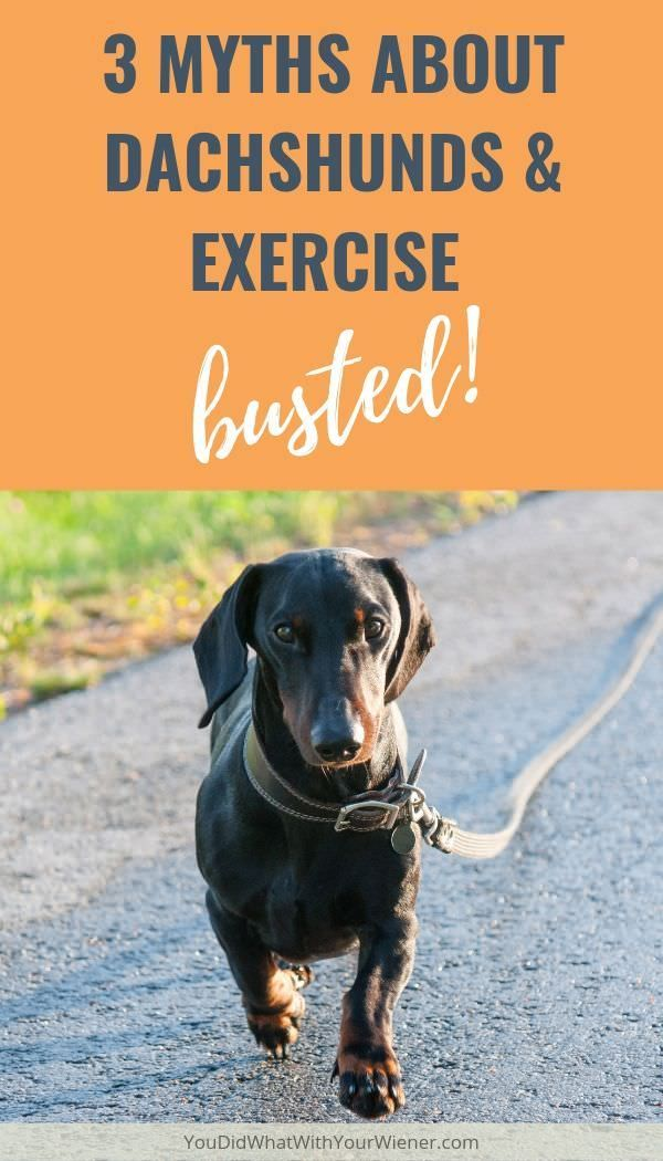 What S The Minimum Exercise Required To Help Keep A Dachshund S