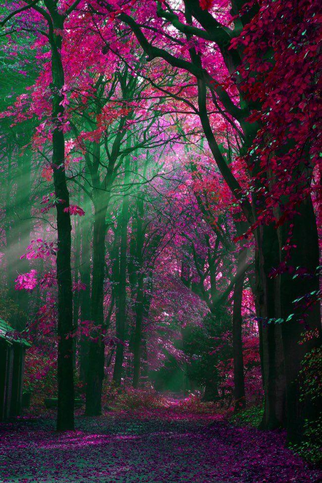 automne-photographie-couleurs-paysages-10
