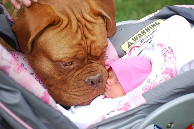 Here we see the typical large dog aggressively abusing this new born baby that she is meeting for the very first time. Snort.