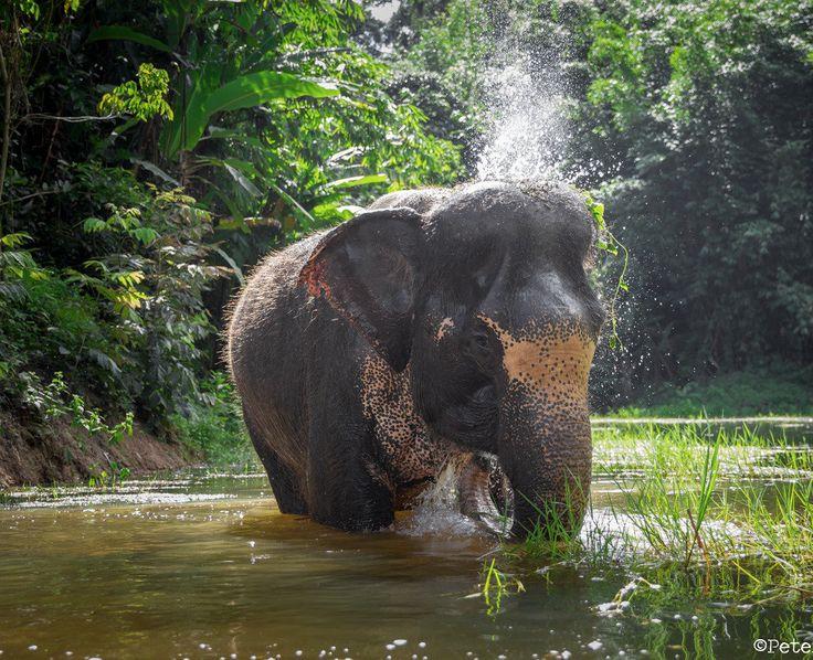 Best ethical elephant sanctuary in Phuket island.