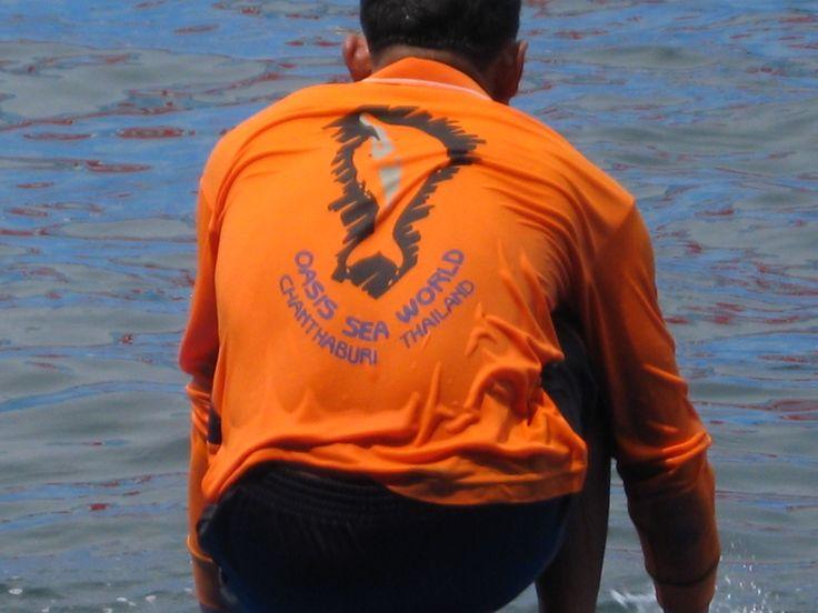 Dolfijnen trainer