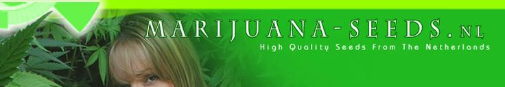 High Quality Marijuana Seeds & Cannabis Seeds for Sale Online - https://www.marijuana-seeds.nl/