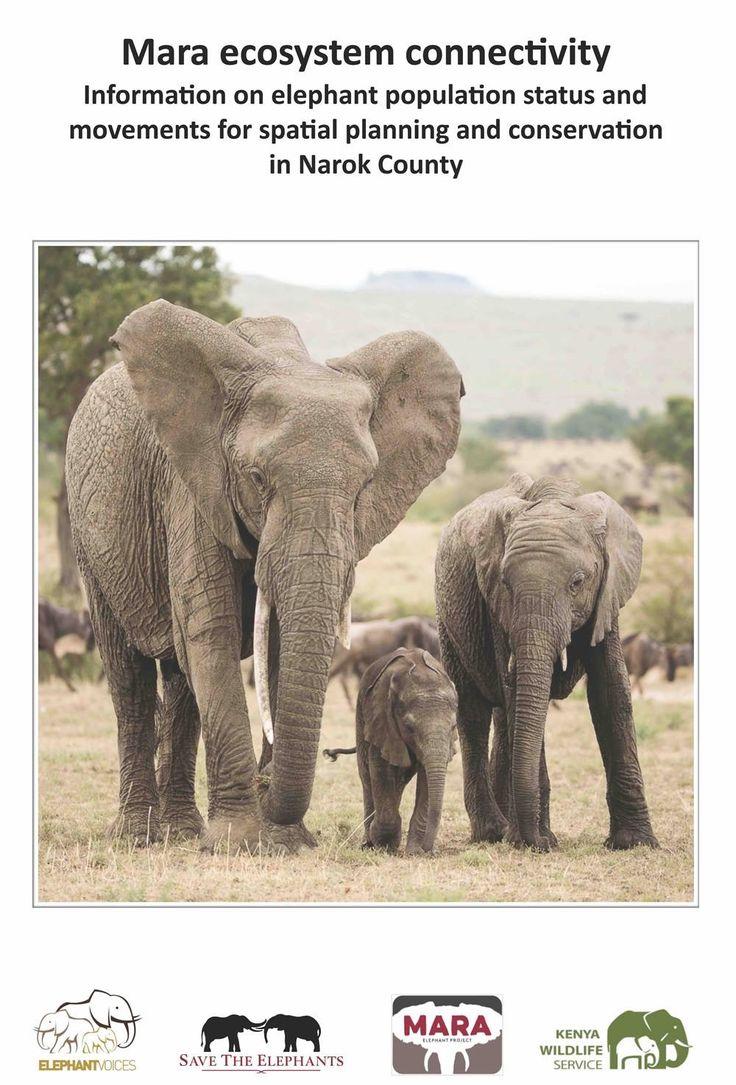 Uncategorized Elephant Information 479 best elephant endangered majesty images on pinterest elephants