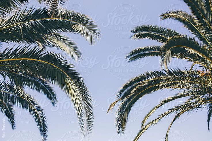 Palm trees leaves in the sky by Maja Topcagic